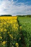 Frühlingslandschaft mit Feldern, Wäldern und blauem Himmel Stockbilder