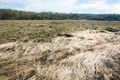 Frühlingslandschaft mit gelbem letztem Jahr u. x27; s-Gras Lizenzfreies Stockfoto