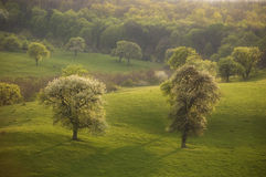 Frühlingslandschaft mit grünem Gras und Bäume u. Sonne Lizenzfreies Stockbild