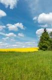 Frühlingslandschaft mit grüner Wiese und gelbem blühendem rapesee Stockfotografie