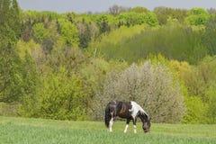 Frühlingslandschaft mit Pferd lizenzfreies stockfoto