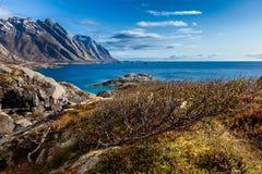 Frühlingslandschaft mit zwergartiger Birke, Seeküste und Bergen Stockbild