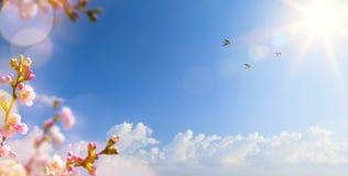 Frühlingslandschaftshintergrund mit Fliegenvögeln und Sprin lizenzfreie stockfotografie