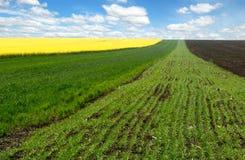 Frühlingslandwirtschaftsfelder Stockbild
