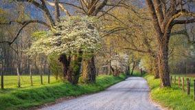 Frühlingslaub, Feldweg, großes rauchiges /mountains Lizenzfreies Stockfoto
