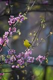 Frühlingsliede Lizenzfreies Stockbild