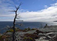 Frühlingsmeerblick entlang der Vater-Troy-` s Spur in Neufundland Kanada, nahe Flatrock lizenzfreies stockbild