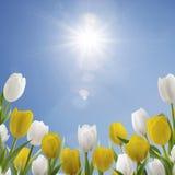 Frühlingsmorgen? Feld des grünen Grases und des blauen bewölkten Himmels Stockfotos