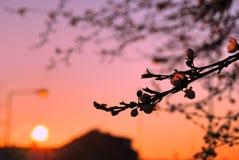 Frühlingsmorgen? Feld des grünen Grases und des blauen bewölkten Himmels Stockbild