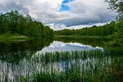 Frühlingsnachmittag in dem Teich, Oberfläche des flachen Wassers lizenzfreie stockfotografie