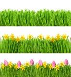 Frühlingsnarzissen-Tulpenblumen Wassertropfen des grünen Grases Lizenzfreie Stockfotos