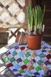 Frühlingsnarzissen und keramische Töpfe auf Gewebe steppen auf Holztisch Lizenzfreies Stockfoto