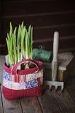 Frühlingsnarzissenbirnen im Patchwork bauschen sich mit Gartenwerkzeug und dem Zweig auf Holztisch Lizenzfreie Stockbilder
