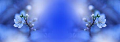 Frühlingsnaturblütenweb-Fahne oder -vorsatz Abstraktes Makrofoto Künstlerischer blauer Hintergrund Fantasiedesign Bunte Tapete Stockfoto