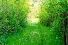 Frühlingsnaturhintergrund, grüne Wiese und Löwenzahn blüht Stockfotografie