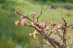 Frühlingsniederlassung Stockbild