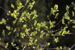 Frühlingsniederlassung Stockbilder