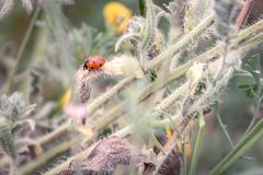 Frühlingsniederlassung mit einem Marienkäfer und einem Frühling blüht im backgroun stockfoto