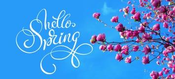 Frühlingsniederlassung von Magnolienrosablumen von Apfel und Text hallo Frühling Kalligraphiebeschriftung stockfotografie