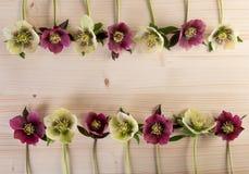 Frühlingsostern-Blumenrahmen-Weinlesehintergrund mit lenten rosafarbenen Blumen über hellem Holz Stockbilder