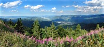 Frühlingspanorama von einem Waldsee stockbild