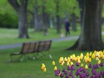 Frühlingspark Stockfotos