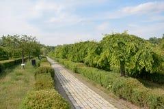 Frühlingspark mit dekorativen Bäumen Stockfotografie