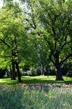 Frühlingspark mit purpurroten Blumen Lizenzfreies Stockbild