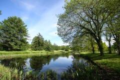Frühlingspark reflektieren sich im Teich Stockbild