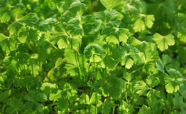 Frühlingspflanzen von Samen im April Lizenzfreie Stockfotografie