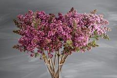 Frühlingsrahmen mit Blume der Flieder Schöne Blumen auf einer grauen Holzoberfläche Weinlesetonen Mit Kopieraum Stockfoto
