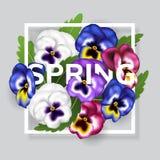 Frühlingsrahmen mit bunter Stiefmütterchenblume und grünem Blatt mit Frühlingsbuchstaben Lizenzfreie Stockbilder