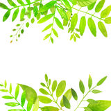 Frühlingsrahmen mit hellgrünen Blättern Vektor Stockfotografie