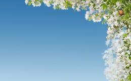 Frühlingsrand lizenzfreies stockfoto