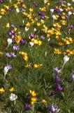 Frühlingsrasen Stockfotografie