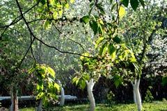 Frühlingsregen in einem Garten Stockbild