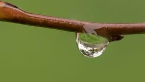 Frühlingsregen-Tröpfchen Lizenzfreies Stockbild