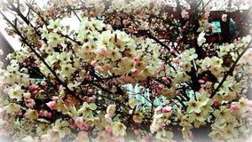 Frühlingsruhm Lizenzfreies Stockfoto