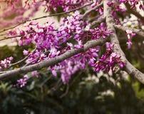 Frühlingssamen Stockbild