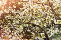 Frühlingssamen Lizenzfreie Stockfotos