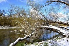 Frühlingsschneefälle im Wald Stockfoto