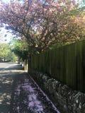 Frühlingsschwingungen Lizenzfreie Stockfotografie
