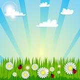 Frühlingssommer-Hintergrund ? Lizenzfreies Stockbild