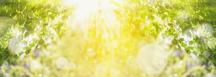 Frühlingssommerhintergrund mit grünem Baum, Sonnenlicht und Sonne strahlt aus