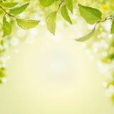 Frühlingssommerhintergrund mit grünen Blättern, Licht und bokeh Stockfotografie