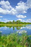 Frühlingssommerlandschaftsblauer Himmel bewölkt Flussteich-Grünbäume stockfoto