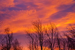 Frühlingssonnenaufgang Stockbild