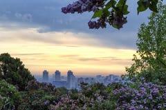 Frühlingssonnenaufgang in botanischem Garten Kiews Lizenzfreies Stockbild