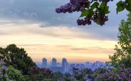 Frühlingssonnenaufgang durch lila Blüten Lizenzfreies Stockfoto