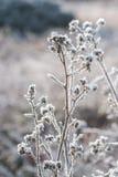 Frühlingssonnenschein auf bereifter Vegetation stockfotos